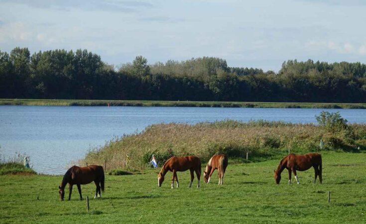 Vakantiehuis aan het water Veluwemeer